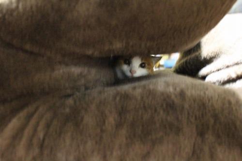 ブログNo.462(座布トンネルで遊ぶ猫)3