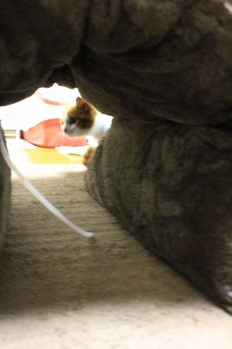 ブログNo.462(座布トンネルで遊ぶ猫)8