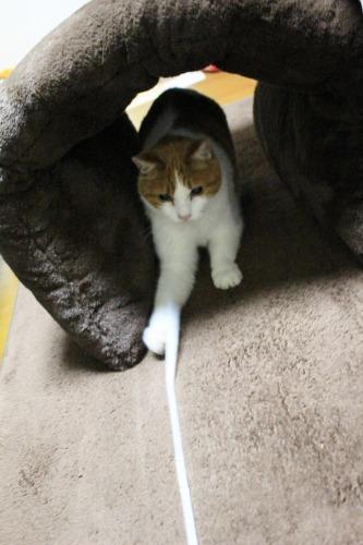 ブログNo.462(座布トンネルで遊ぶ猫)11