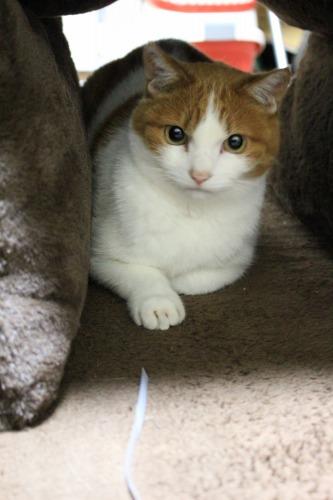 ブログNo.462(座布トンネルで遊ぶ猫)12