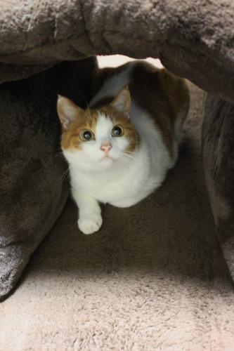 ブログNo.462(座布トンネルで遊ぶ猫)14