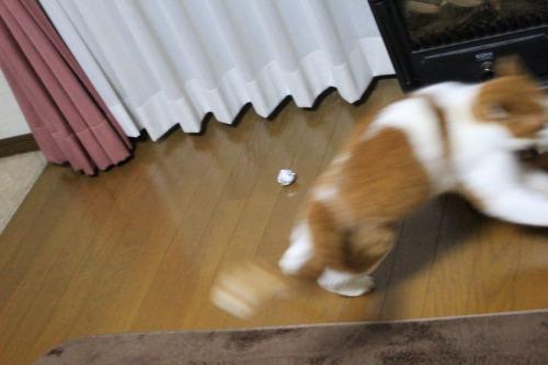 ブログNo.498(ハンター猫)4