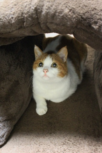 ブログNo.462(座布トンネルで遊ぶ猫)15