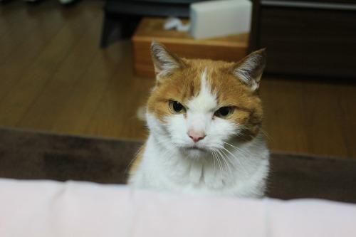 ブログNo.498(ハンター猫)6