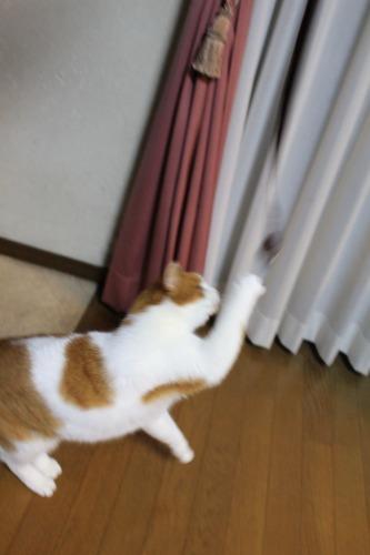 ブログNo.498(ハンター猫)7