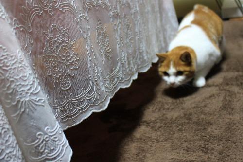 ブログNo.498(ハンター猫)11