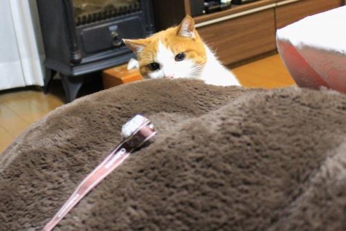 ブログNo.498(ハンター猫)13