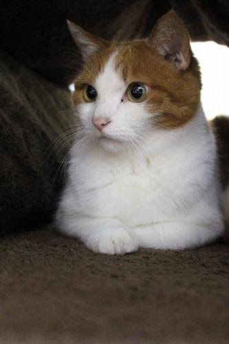 ブログNo.462(座布トンネルで遊ぶ猫)16