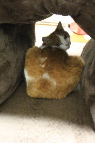 ブログNo.462(座布トンネルで遊ぶ猫)17