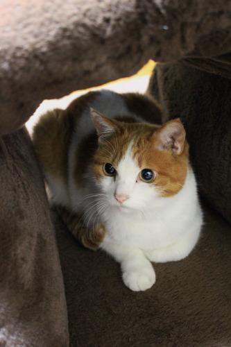 ブログNo.462(座布トンネルで遊ぶ猫)18