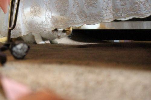 ブログNo.498(ハンター猫)17