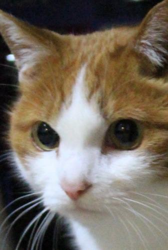 ブログNo.498(ハンター猫)1