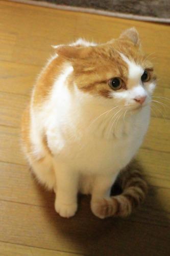 ブログNo.504短編(舌をしまい忘れた猫)8