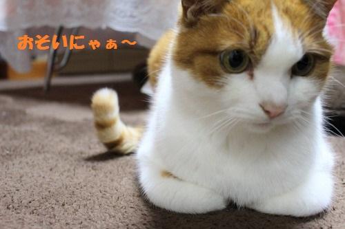 ブログNo.505(先日の災難の一コマと変わったご飯アピール)11