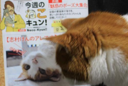 ブログNo.467【号外】本日発売FLASHに掲載されました。1
