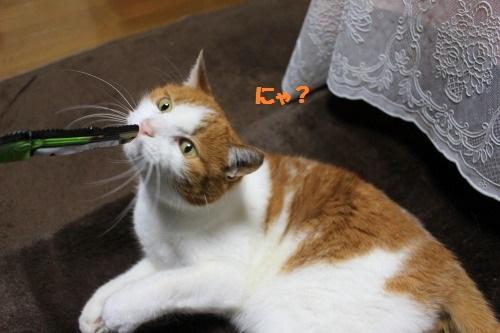 ブログNo.501(切れっ端でも盛り上がる猫)1