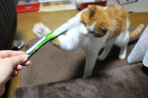 ブログNo.501(切れっ端でも盛り上がる猫)3
