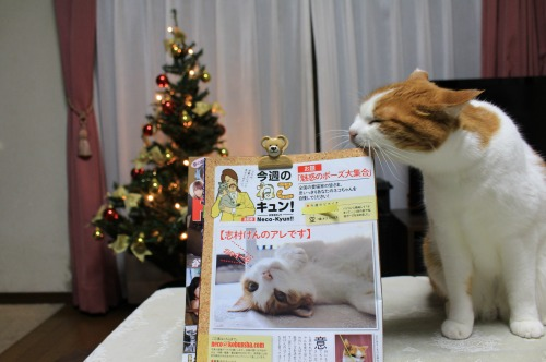 ブログNo.467【号外】本日発売FLASHに掲載されました。4