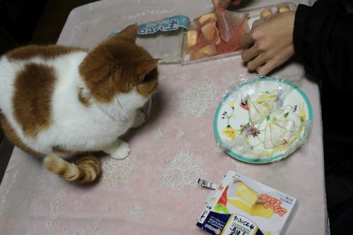 ブログNo.522(お蔵入り猫画像発掘!第六弾&(^・ェ・)ジー…)11