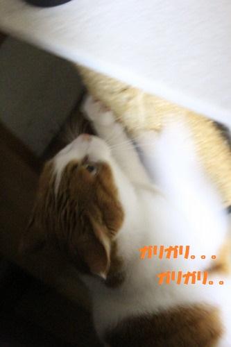 ブログNo.501(切れっ端でも盛り上がる猫)12