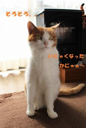 ブログNo.505(先日の災難の一コマと変わったご飯アピール)6
