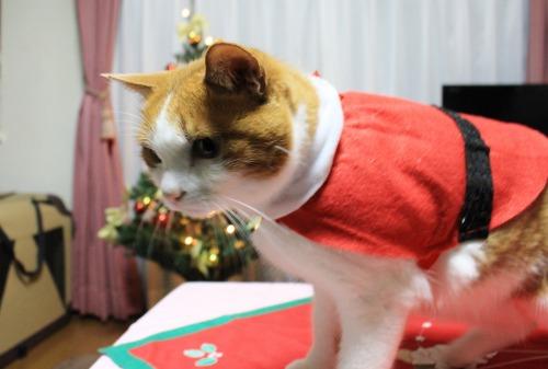 ブログNo.470(思いがけないクリスマスプレゼント2