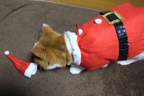 ブログNo.470(思いがけないクリスマスプレゼント3