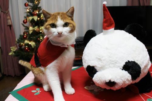 ブログNo.470(思いがけないクリスマスプレゼント)11