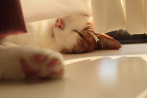 ブログNo.474(にゃんとしても眠い)5