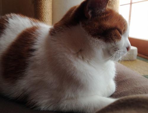 ブログNo.461(看病猫、じゃれ猫、爆睡猫)1