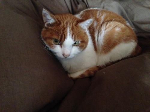 ブログNo.461(看病猫、じゃれ猫、爆睡猫)2