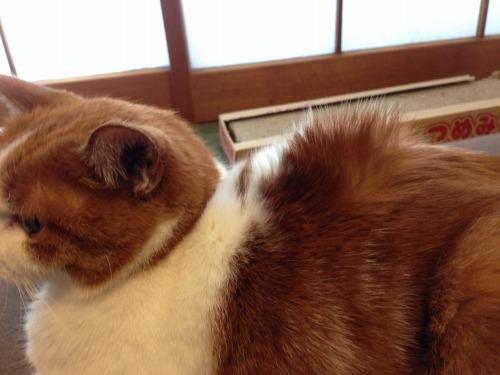 ブログNo.484(モヒカン猫&くぅにゃんの1月)1