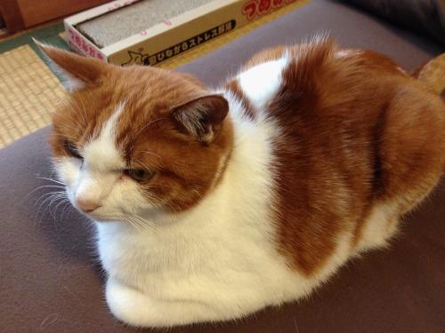 ブログNo.484(モヒカン猫&くぅにゃんの1月)3