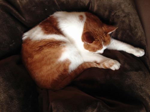 ブログNo.492(埋もれ猫)1