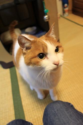 ブログNo.507実証(怒!!)5