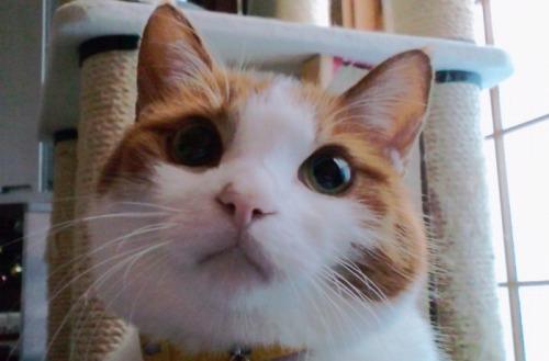 ブログNo.527(お蔵入り猫画像発掘!第九弾(お蔵入り動画))15