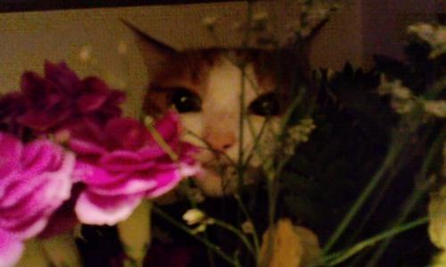 ブログNo.527(お蔵入り猫画像発掘!第九弾(お蔵入り動画))11