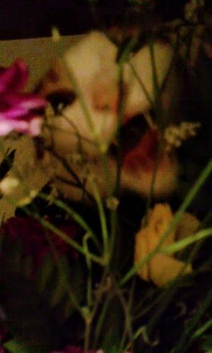 ブログNo.527(お蔵入り猫画像発掘!第九弾(お蔵入り動画))12