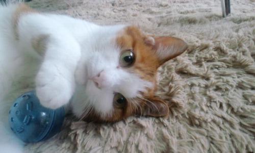 ブログNo.527(お蔵入り猫画像発掘!第九弾(お蔵入り動画))10