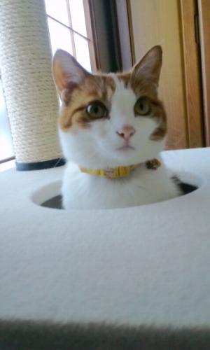 ブログNo.527(お蔵入り猫画像発掘!第九弾(お蔵入り動画))9
