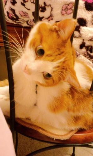ブログNo.527(お蔵入り猫画像発掘!第九弾(お蔵入り動画))7