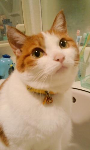 ブログNo.527(お蔵入り猫画像発掘!第九弾(お蔵入り動画))6