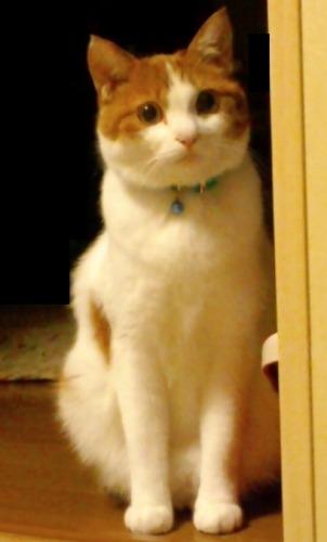 ブログNo.527(お蔵入り猫画像発掘!第九弾(お蔵入り動画))2