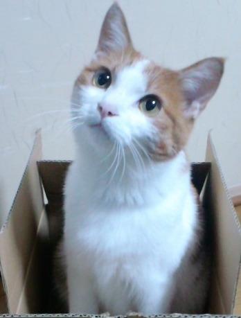 ブログNo.526(お蔵入り猫画像発掘!第八弾(°_°;)ハラハラ)8