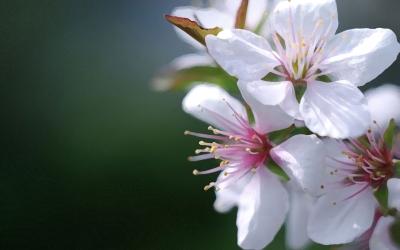 flower-back1434.jpg