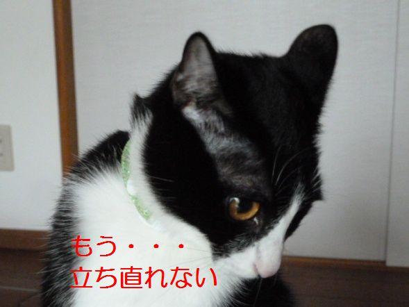 P1290065.jpg