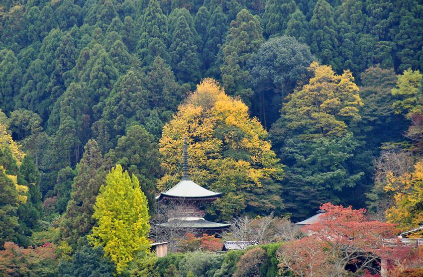 嵐山(秋)2