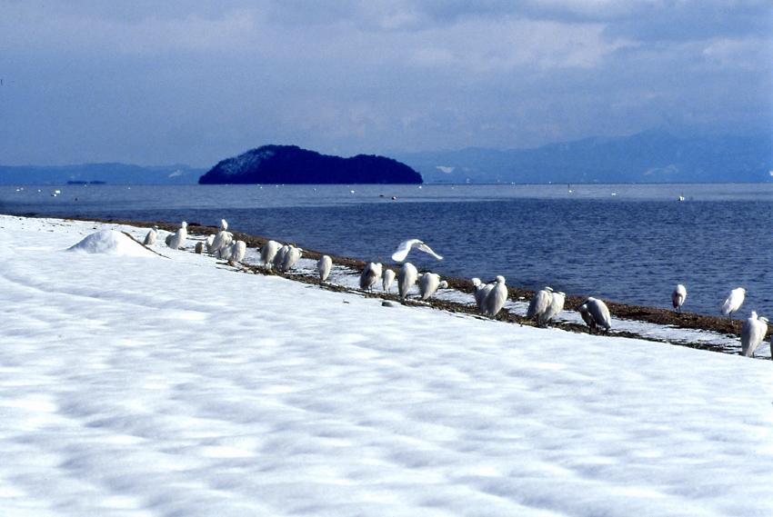 湖北(冬)01