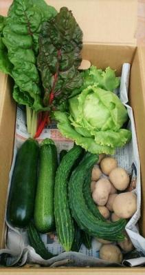 野菜セット 春夏2