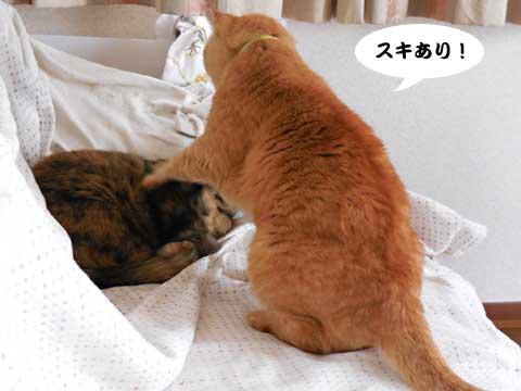 15_11_01_1.jpg